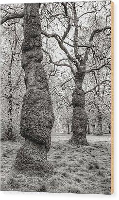 Trees In Hyde Park London Wood Print by Jim Hughes