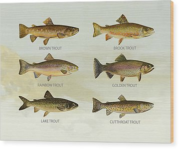 Trout Species Wood Print by Aged Pixel