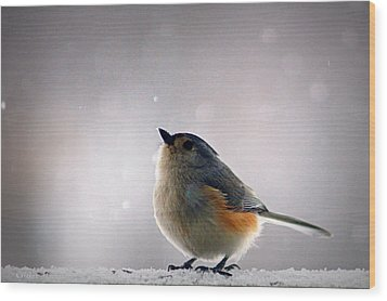 Tufted Titmouse Wood Print by Cricket Hackmann