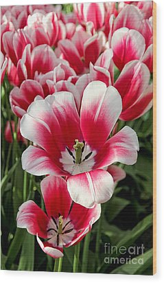 Tulip Annemarie Wood Print by Jasna Buncic