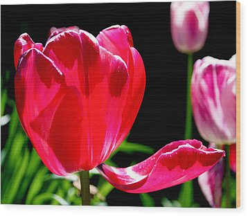 Tulip Extended Wood Print by Rona Black