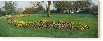 Tulips In Hyde Park, City Wood Print by Panoramic Images