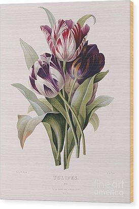 Tulips Wood Print by Pierre Joseph Redoute