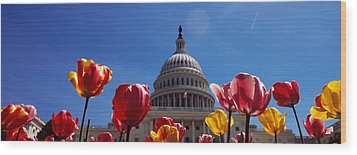 Tulips With A Government Building Wood Print by Panoramic Images