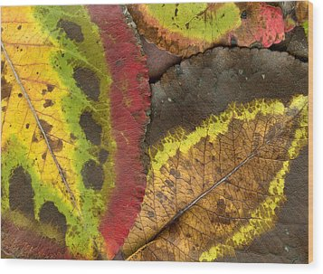 Turning Leaves 2 Wood Print by Stephen Anderson