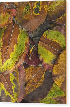 Turning Leaves 4 Wood Print by Stephen Anderson