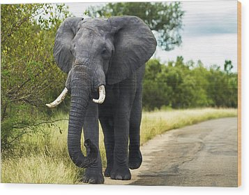 Tusker With Attitude Wood Print by Peter Turner