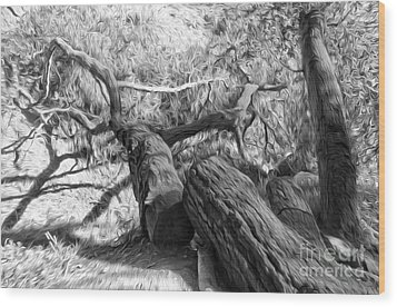 Twisted Tree - 03 Wood Print by Gregory Dyer