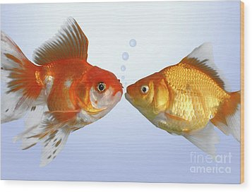 Two Fish Kissing Fs502 Wood Print by Greg Cuddiford
