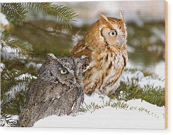 Two Screech Owls Wood Print by John Pitcher