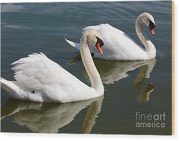 Two Swimming Swans Wood Print by Carol Groenen