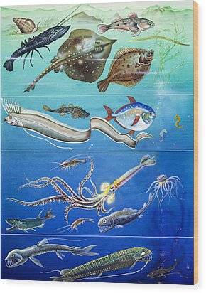 Underwater Creatures Montage Wood Print by English School
