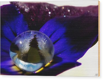 Underwater Universe Unfolding Wood Print by Lisa Knechtel