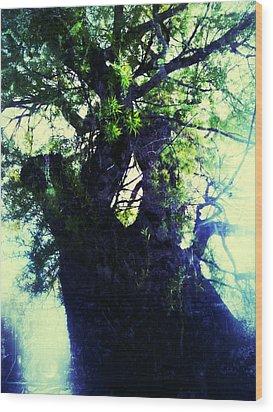 Untitled -tree Star Wood Print by Juliann Sweet