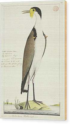 Vanellus Miles Wood Print by Natural History Museum, London