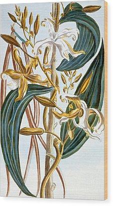 Vanilla Pods Wood Print by Pierre-Joseph Buchoz