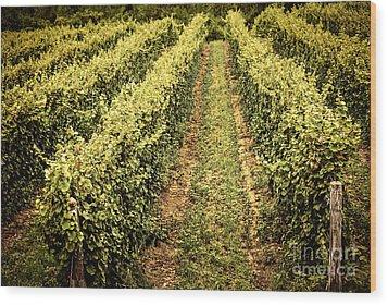 Vines Growing In Vineyard Wood Print by Elena Elisseeva