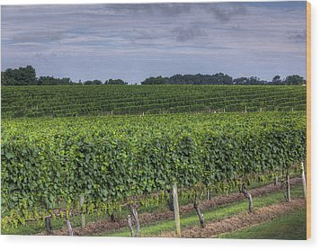 Vineyard Rows Wood Print by Steve Gravano
