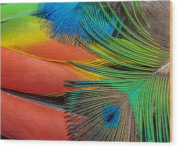 Vivid Colored Feathers Wood Print by Jeff Swanson