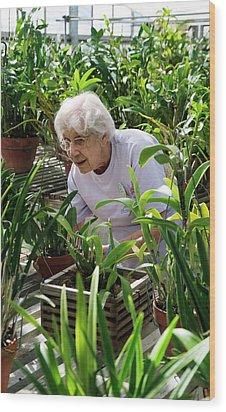 Volunteer At A Botanic Garden Wood Print by Jim West