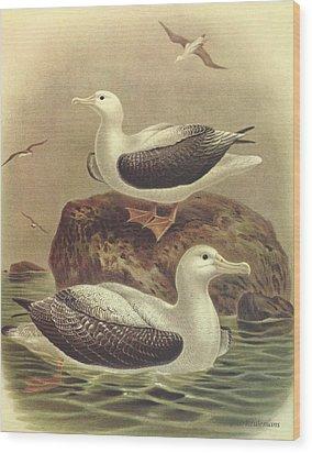 Wandering Albatross Wood Print by J G Keulemans