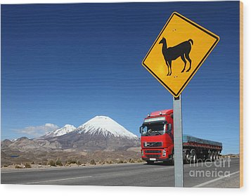 Watch Out For Llamas Wood Print by James Brunker