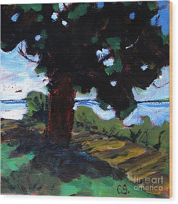 Waukegan State Park Wood Print by Charlie Spear