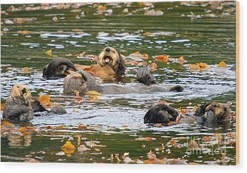 We Otter Be In Pictures Wood Print by Bob Hislop