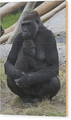 Western Lowland Gorilla Mother And Baby Wood Print by San Diego Zoo