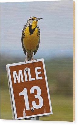 Western Meadowlark On The Mile 13 Sign Wood Print by Karon Melillo DeVega