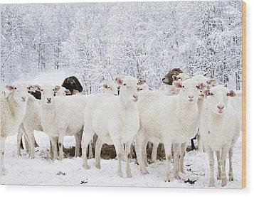 White As Snow Wood Print by Thomas R Fletcher