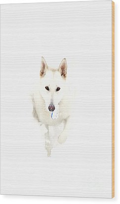 White German Shepherd In Snow Wood Print by Thomas R Fletcher