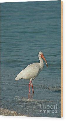 White Ibis Wood Print by Cindi Ressler