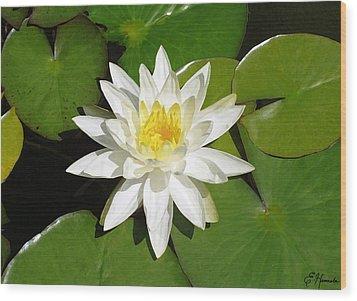 White Lotus Wood Print by Ellen Henneke