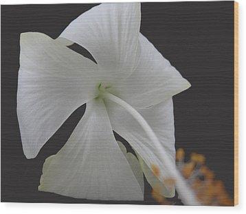 White Petals Wood Print by Rohit Jadav