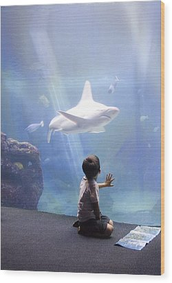 White Shark And Young Boy Wood Print by David Smith
