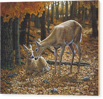 Whitetail Deer - Autumn Innocence 2 Wood Print by Crista Forest