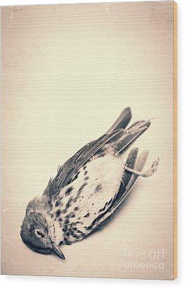 Who Killed Cock Robin Wood Print by Edward Fielding