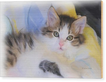 Wide Eyed Kitten Wood Print by Kenny Francis