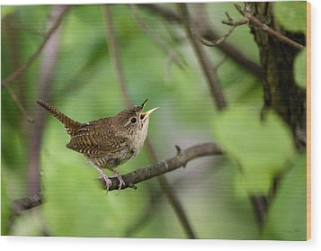 Wild Birds - House Wren Wood Print by Christina Rollo