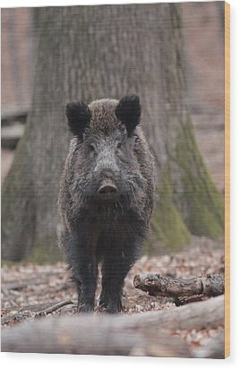 Wild Boar Wood Print by Dragomir Felix-bogdan