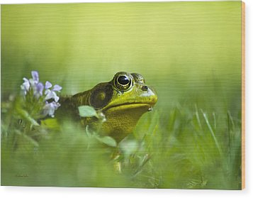 Wild Green Frog Wood Print by Christina Rollo
