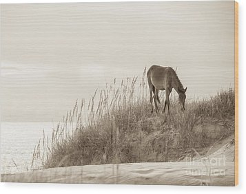 Wild Horse On The Outer Banks Wood Print by Diane Diederich