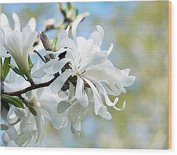 Wild Magnolia Blooms Wood Print by Pamela Patch