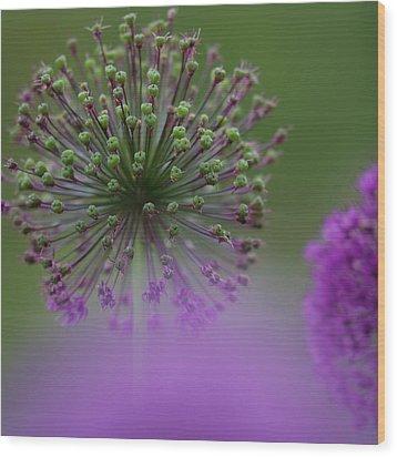 Wild Onion Wood Print by Heiko Koehrer-Wagner