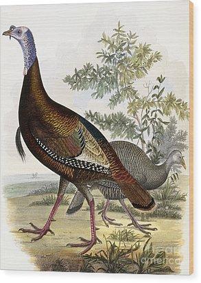 Wild Turkey Wood Print by Titian Ramsey Peale