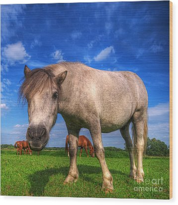 Wild Young Horse On The Field Wood Print by Michal Bednarek