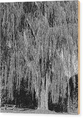 Willow Tree Wood Print by Paul Gioacchini
