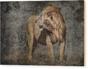 Windswept Lion Wood Print by Mike Gaudaur