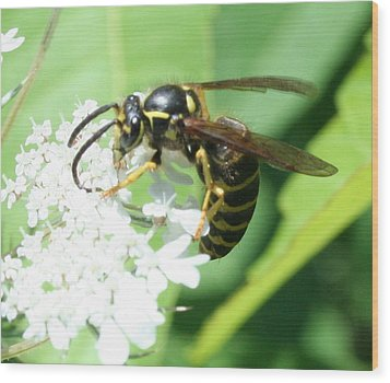 Wings And White Flowers Wood Print by Stephen Melcher
